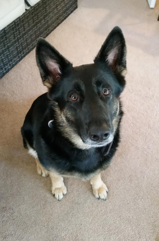 Molly the German Shepherd who died after being hit on the head with a hammer by her owner and dumped in the River Tyne