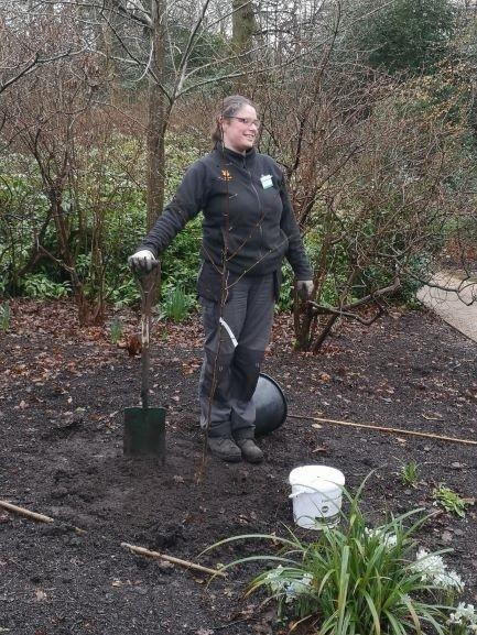 Emily Chandler, the head gardener, standing by the tree.