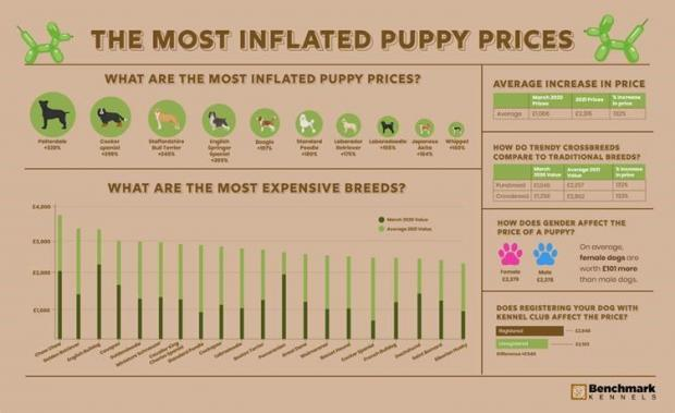 Messenger Newspapers: The most inflated puppy prices. (Benchmark Kennels)