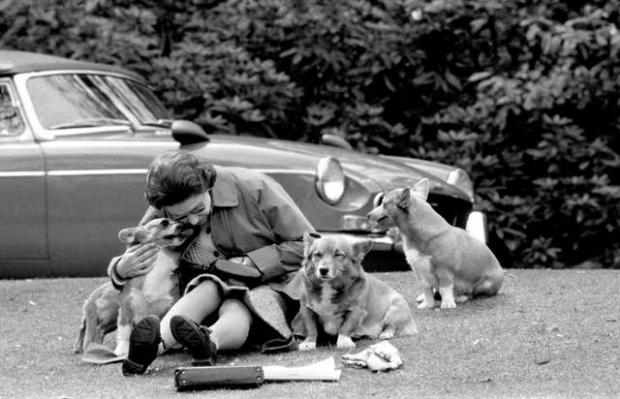 Messenger Newspapers: The Queen with some of her dogs in 1973 (PA)