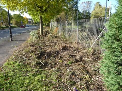 Shrubbery has been cut down long Thorley Lane