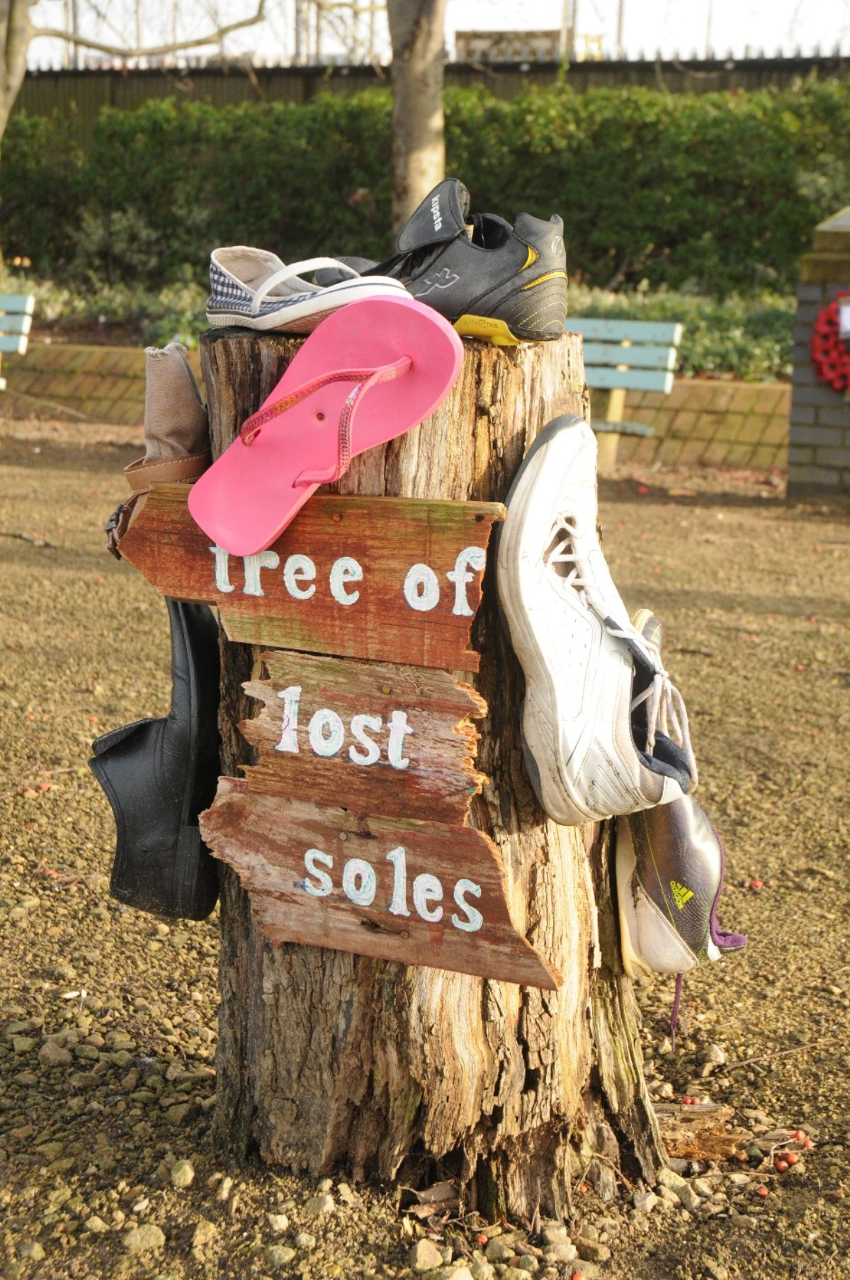 Mystery of Altrincham's 'tree of lost soles'