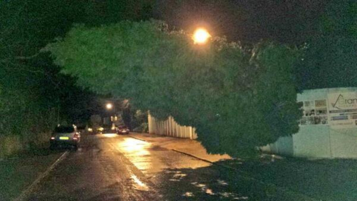 ROUND UP: Gale force winds hit Trafford, uprooting trees and causing traffic misery