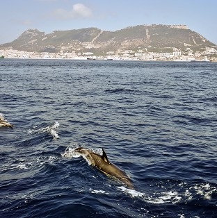 A pod of dolphins is reported to have protected a British swimmer undertaking the Oceans Seven