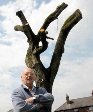 Donald Bradnam and the willow tree