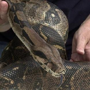 A boa constrictor missing in Lancashire could pose a risk to small children as it seeks warmth, police have warned