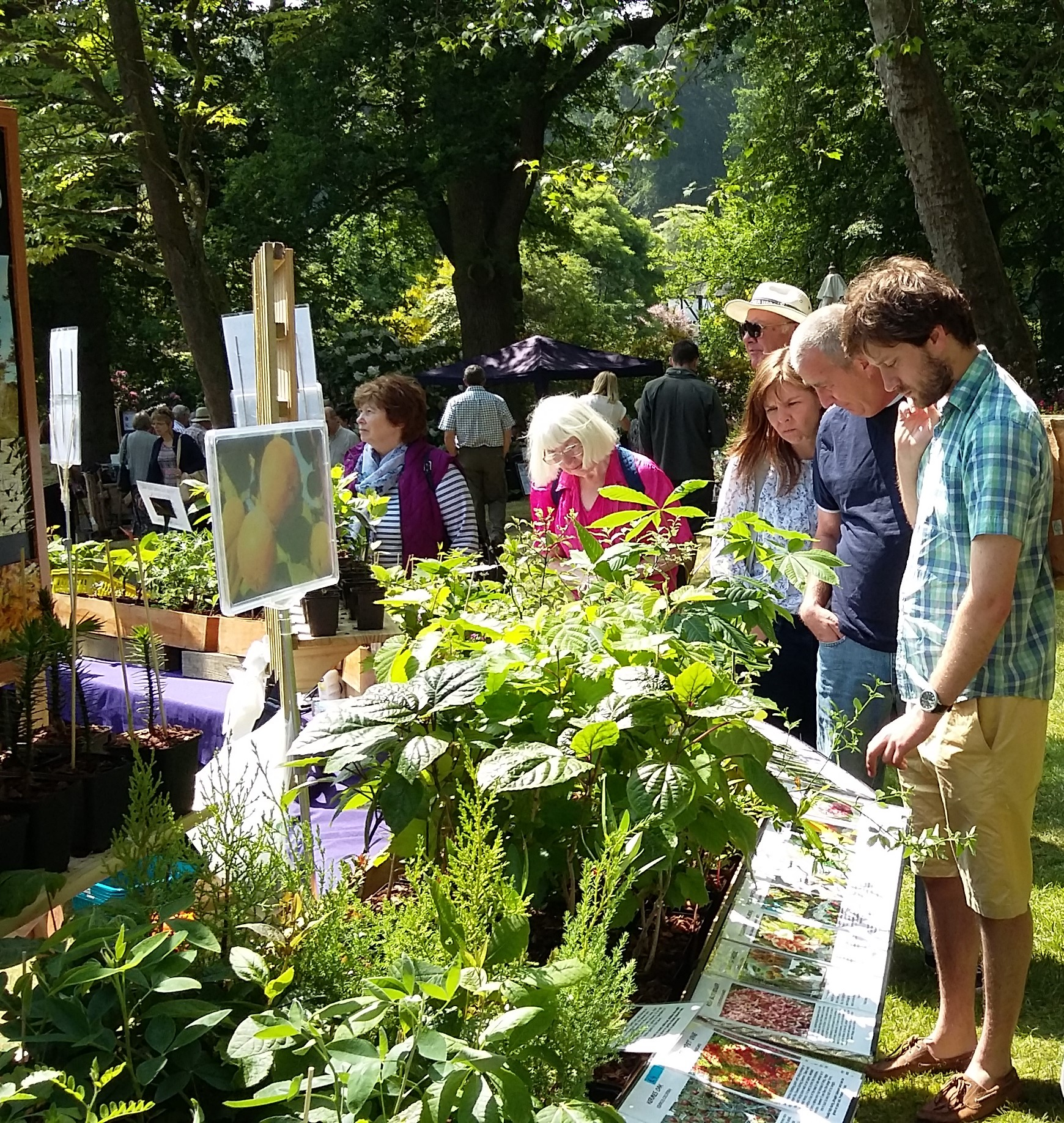 Plant Hunters' Fair at Ness Botanic Gardens on Sunday 25th March