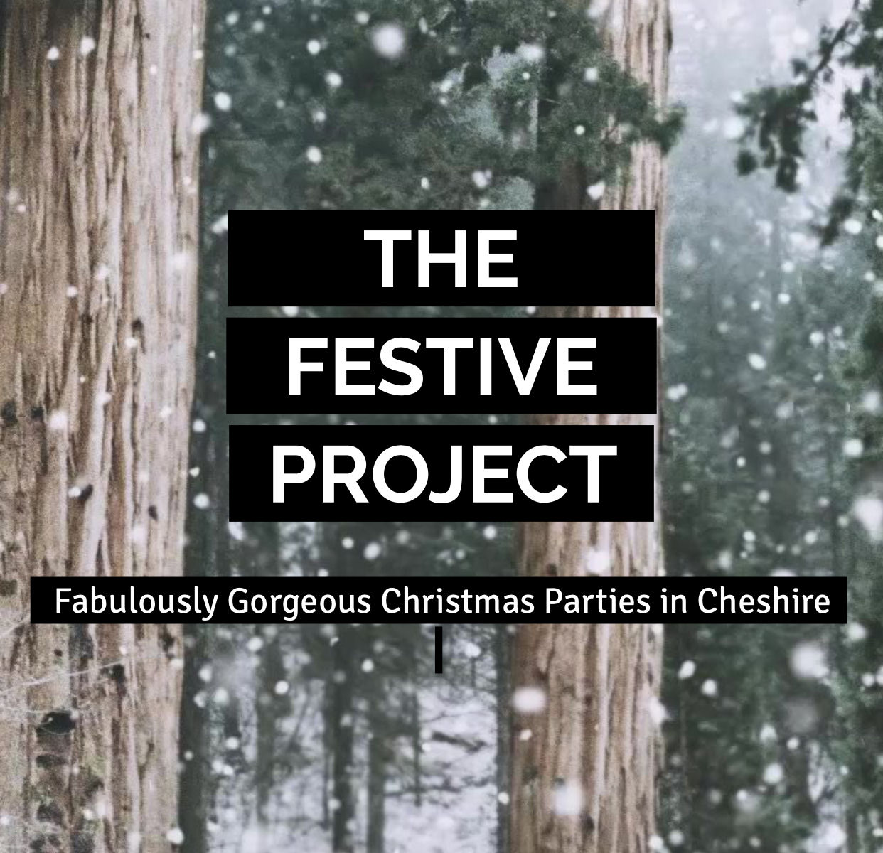 The Festive Project - Friday 15th December