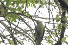 Reader Claire Evans took this photo of a ring necked parakeet at Sale Water Park