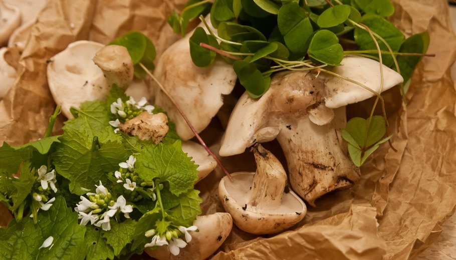 Spring Foraging Course