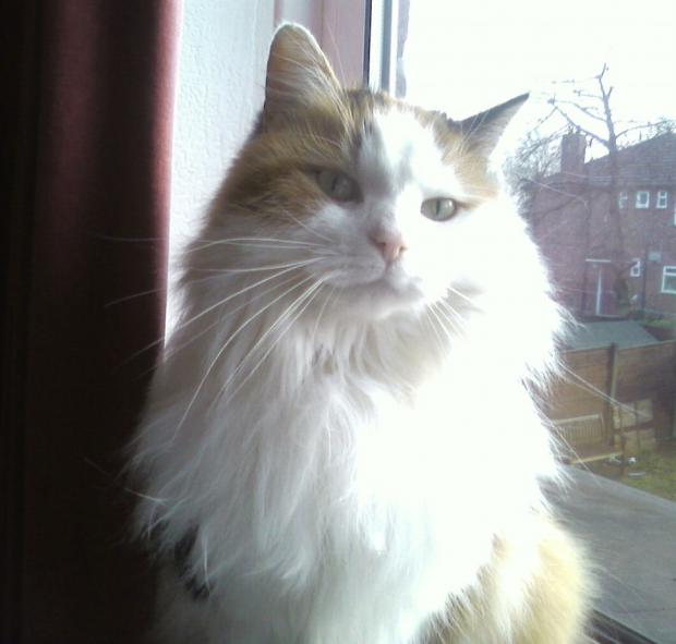 Josie - Missing in North Reddish