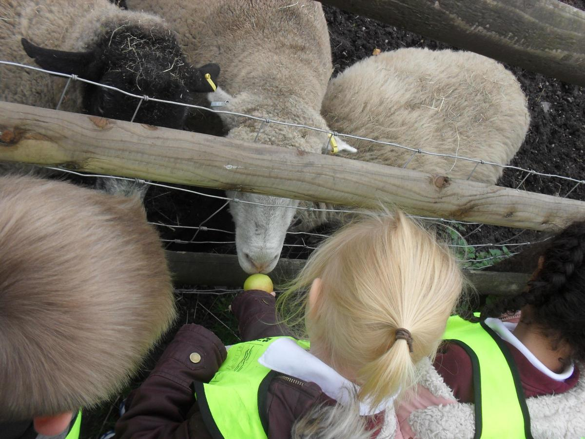 Schoolchildren visit Pimhole Community Farm in October 2018